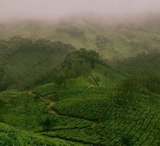 宁波景安茶文化有限公司